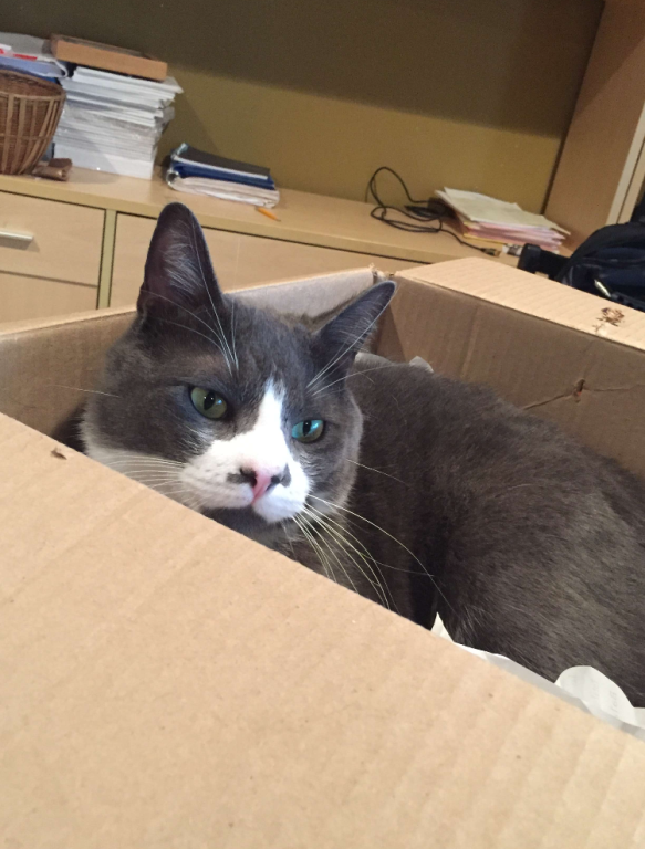 Mittens+the+cat+happily+sits+inside+a+cardboard+box%2C+but+the+actual+Schrodinger%E2%80%99s+Cat+experiment+is+completely+theoretical.