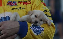 David Gilliland runs dog-gone good lap