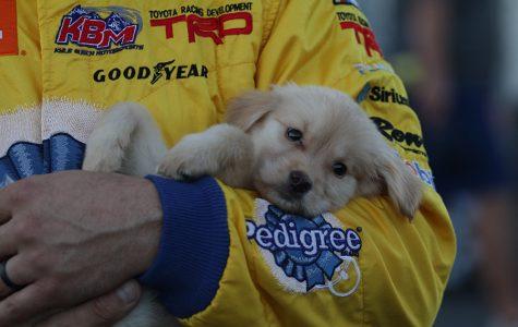 David Gilliland runs dog-gone good lap