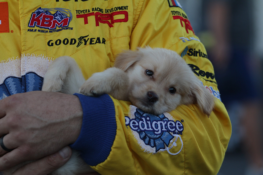 Fr8Auctions 250 pole-winner, David Gilliland, holds his new puppy Winston. After not performing any qualifying runs in practice this pole win came as a surprise to the driver of the No. 51 Pedigree Toyota for Kyle Busch Motorsports.