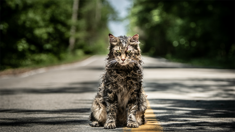 """Church the cat, after his resurrection, returns changed for the worse in the reboot of """"Pet Sematary."""" Thankfully, only Church returned from the grave worsened: this movie does not."""
