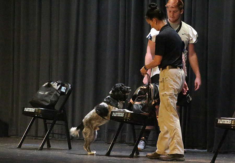 Jerry, one of the search dogs that Interquest will use at Starr's Mill, demonstrates his ability on stage. Interquest is a detection program whose goal is to reduce the presence of drugs, alcohol, and weapons on school campuses.